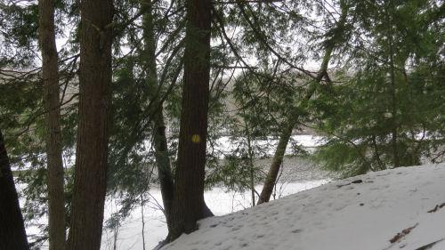 Swan Creek Trail