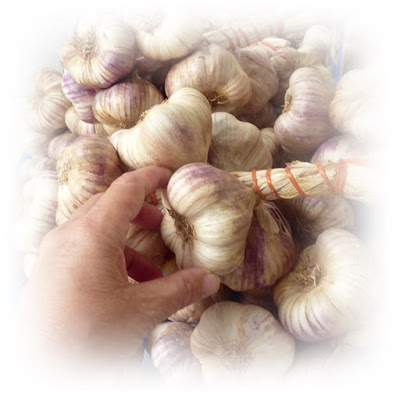 buying-fresh-garlic