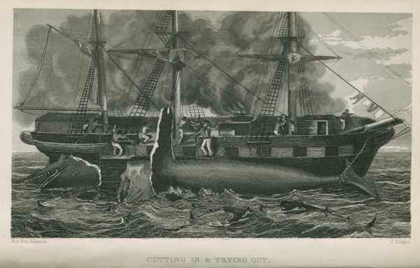 http://dcc.newberry.org/items/etchings-of-a-whaling-cruise-with-notes-of-a-sojourn-on-the-island-of-zanzibar-and-a-brief-history-of-the-whale-fishery-in-its-past-and-present-condition