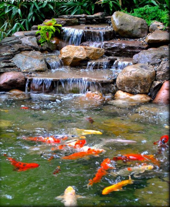Types of koi pond which one is the best myrokan for Koi pond water quality