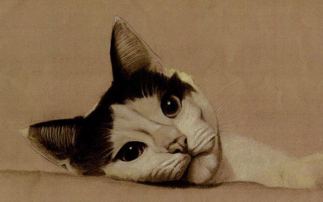 Retrato de gato blanco y negro con carboncillo