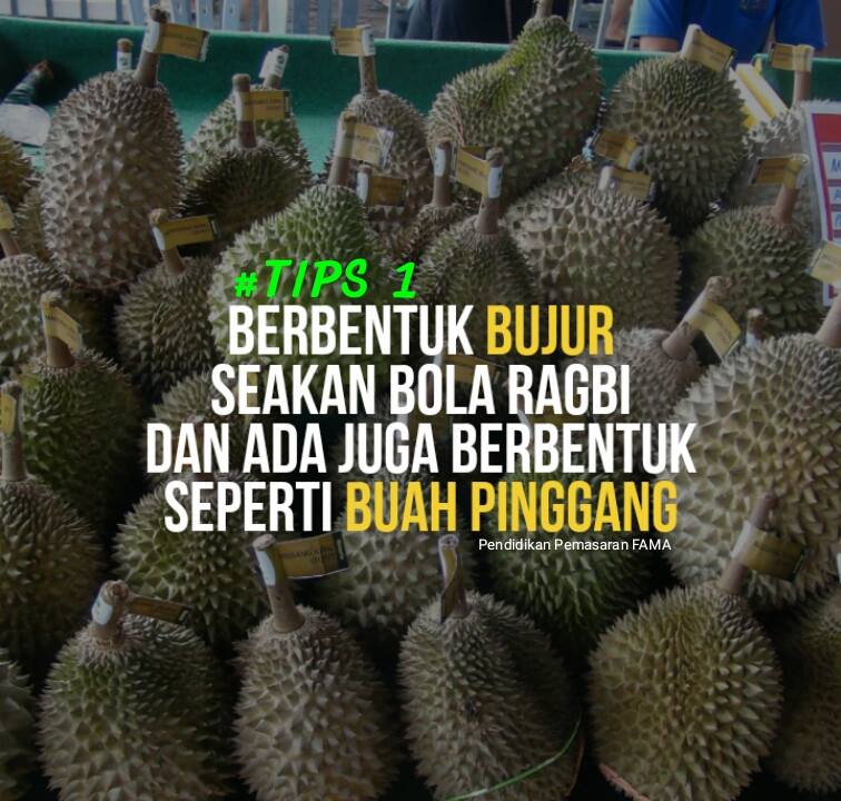 Tips 1 Mengenal Durian Musang King