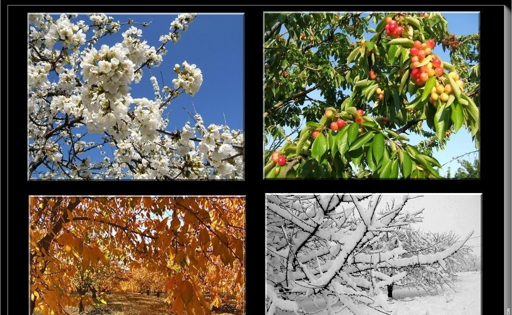 Nature Four Seasons: Four Seasons Of This Year