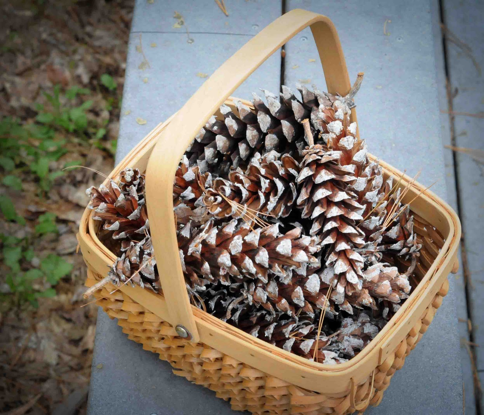 Gonna Stuff A Chicken: Ideas For Pine Cone Christmas