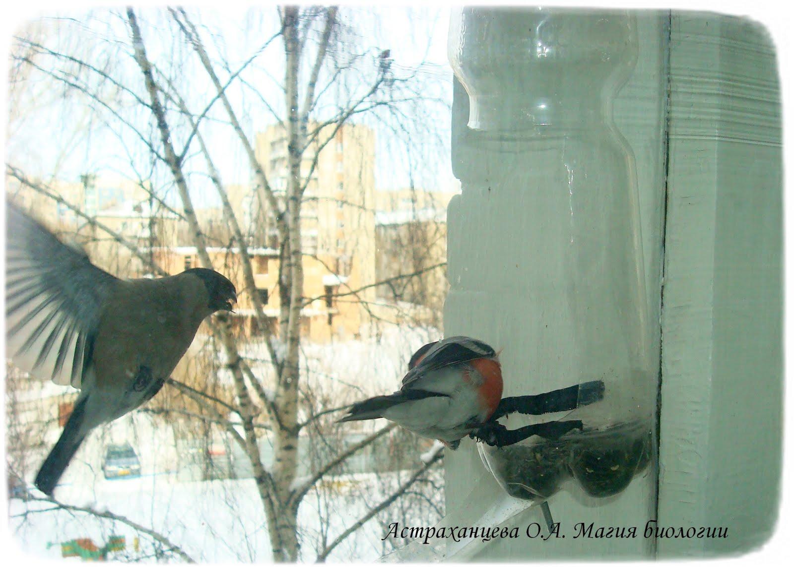 Кормушка птиц за окно своими руками фото 929