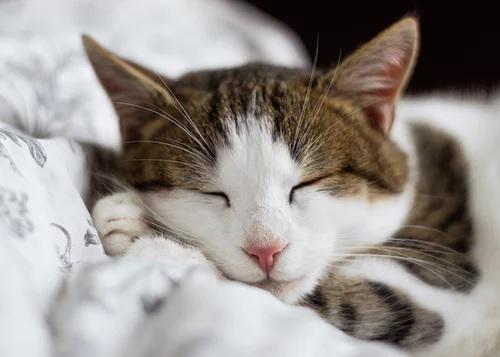 Pet Health Cat Insurance