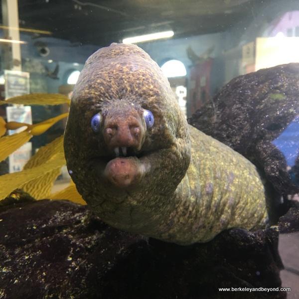 moray eel at Santa Monica Pier Aquarium at Santa Monica Pier in Santa Monica, California