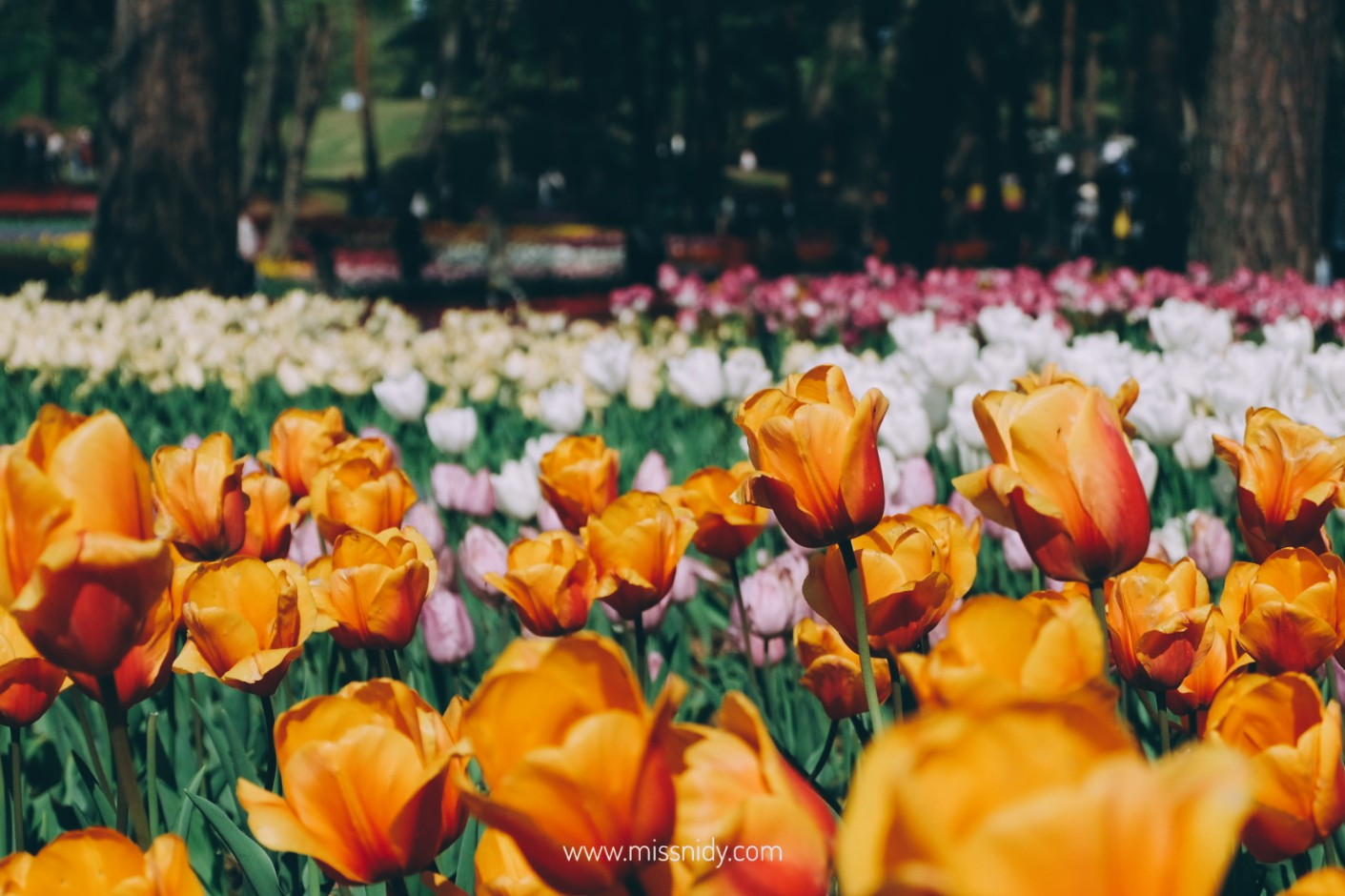 travelling ke jepang pas musim semi