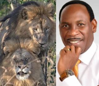 gay lions mating kenyan park homosexuals