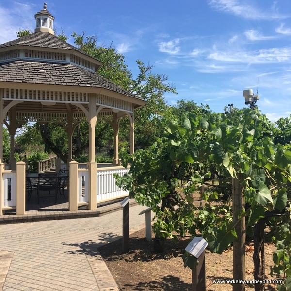 Wine Sensory Gardens at Kendall-Jackson Wine Estate & Gardens in Fulton, California