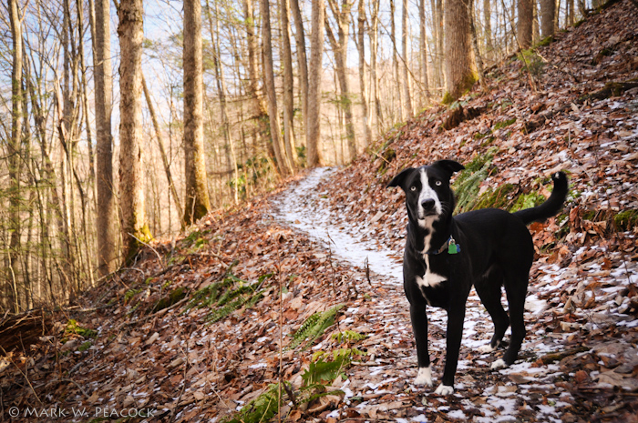 Can I Take My Dog On The Appalachian Trail