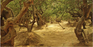 निधिवन या मधुबन मे श्री कृष्ण की रासलीला का रहस्य| Nidhivan, Madhuban Vrindavan Gardens| Josforup