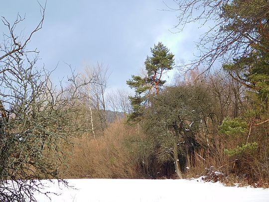 Polana z zachowaną roślinnością nieleśną.