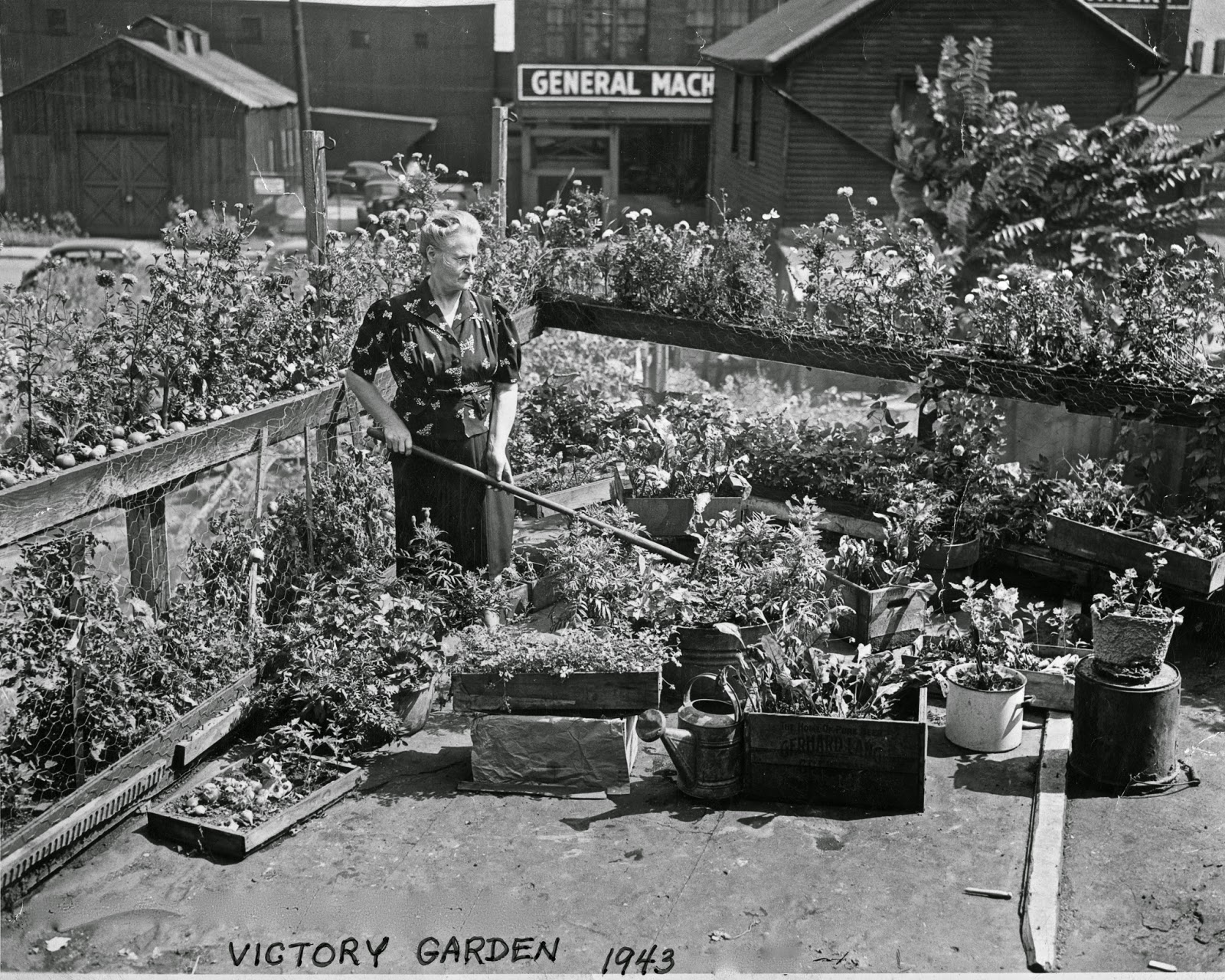 the victory garden - The Victory Garden