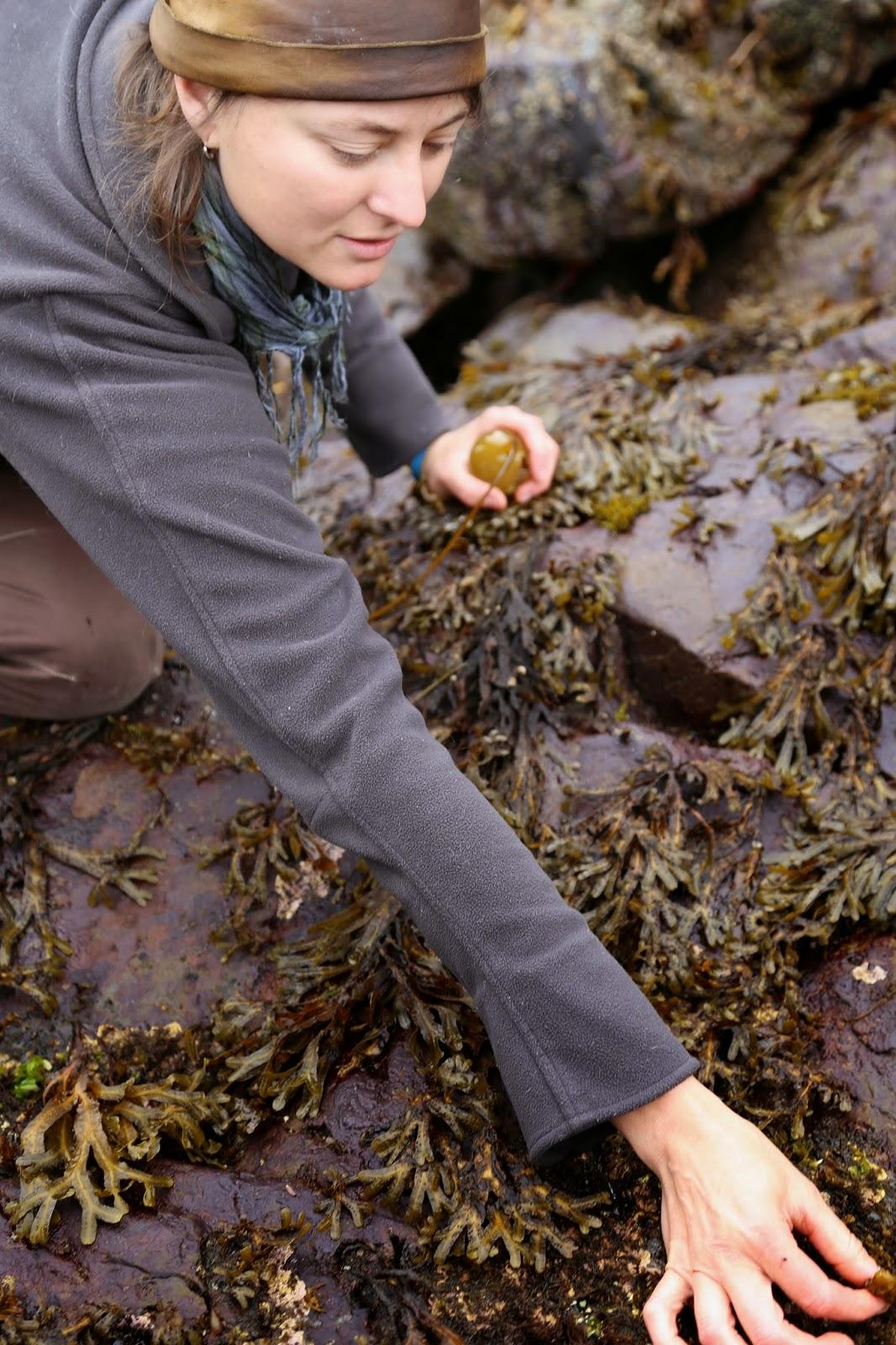Hope Merritt seaweed forager, , Alaska pic: Kerstin Rodgers/msmarmitelover.com