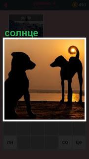 в вечернее время стоят собаки, у одной из них в кольце хвоста солнце