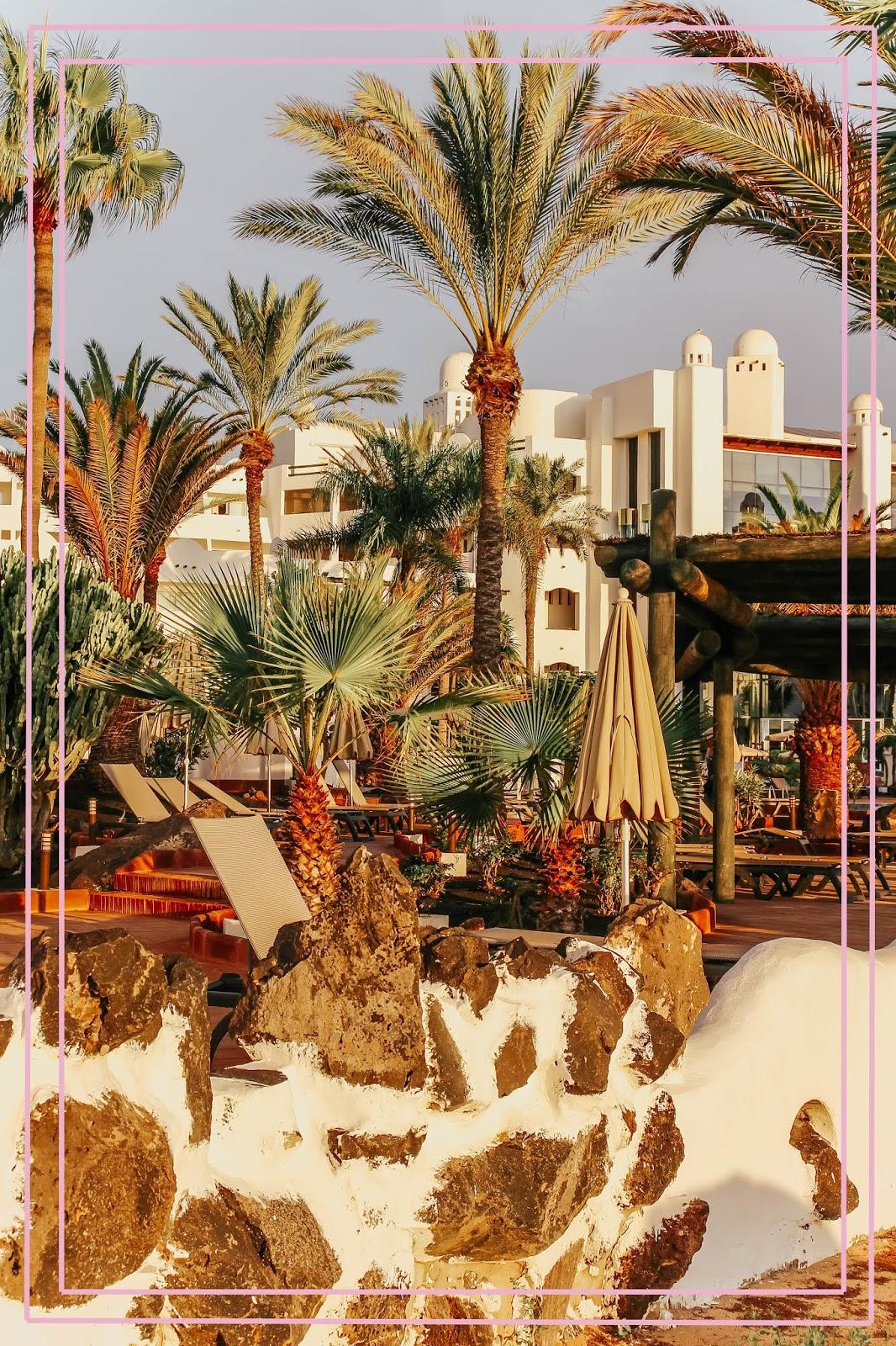 Lanzarote Playa Blanca Palm Trees