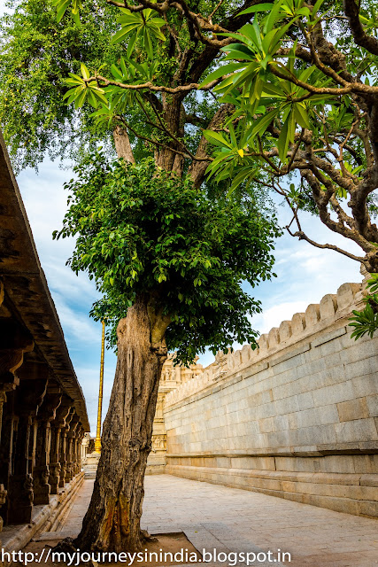 Lepakshi Temple Tree