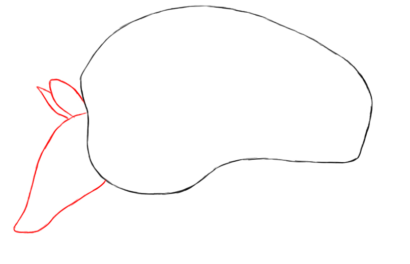 how to draw an armadillo # 61