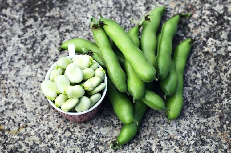 How To Grow Pinto Beans Kilimo Hai