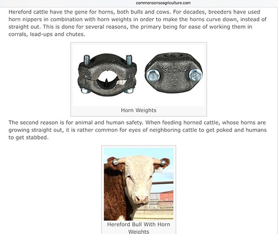 Use horn weights and rely on gravity to shape cattle horns (Source: commonsenseagriculture.com)
