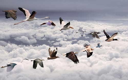 بحث حول هجرة الطيور