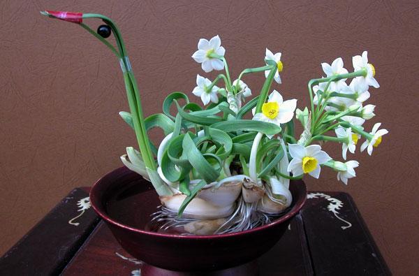 hoa thủy tiên đẹp nhất thế giới