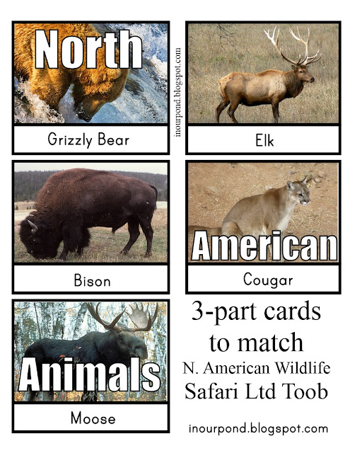 FREE 3-Part Cards for Safari Ltd North American Animals Toob from In Our Pond