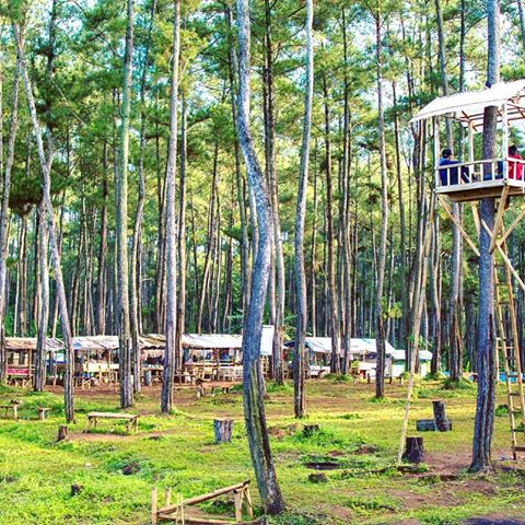 Destinasi-exsotisnya-wisata-hutan kemit-yang-aduhai
