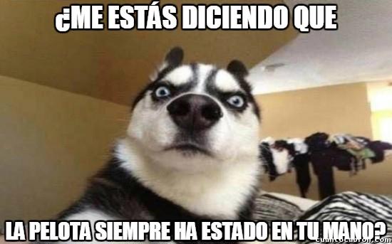 Husky Frases: Memes Del Perro Husky Para Compartir Y Reir