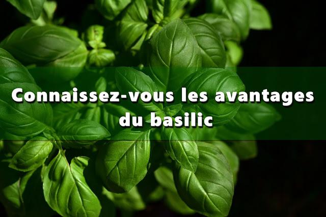 Connaissez-vous les avantages du basilic?
