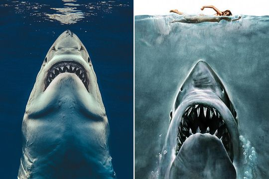 Great white shark recreates Jaws poster in incredible snap by Brit photographer