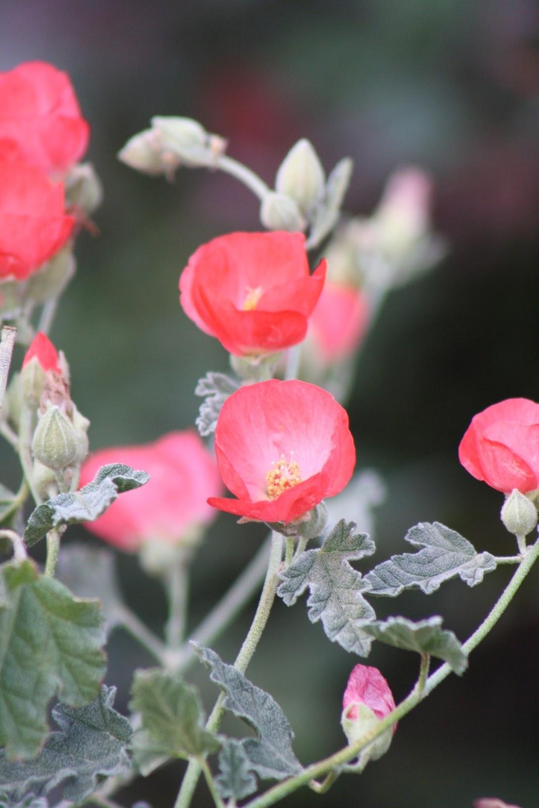 Vivero Growers Garden Happy March Gbbd