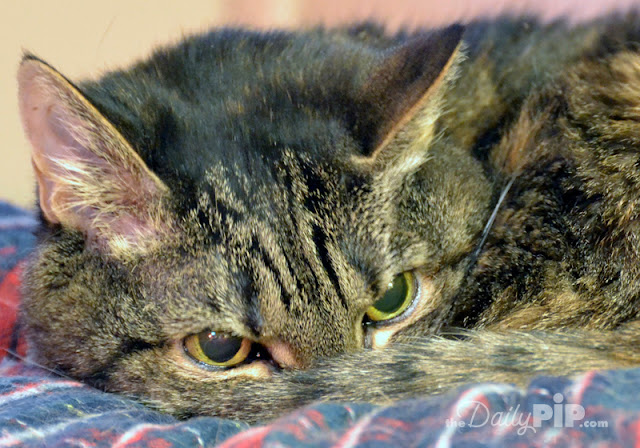 How to rescue, rehabilitate, and adopt an abused cat