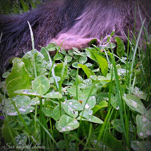 Le chat, pissenlits, hautes herbes et trèfles sous la pluie