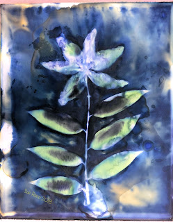 Wet cyanotype_Sue Reno_Image 420