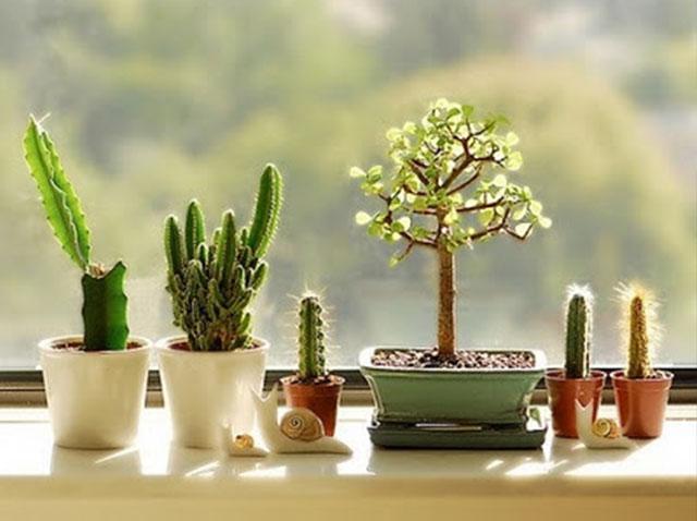 Cactus e iluminación