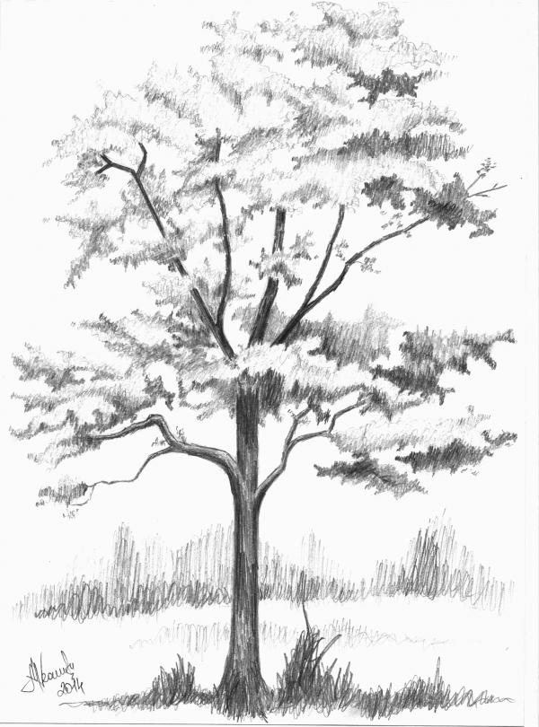 85 Tutorial Cara Gambar Pohon Psikotes Pdf