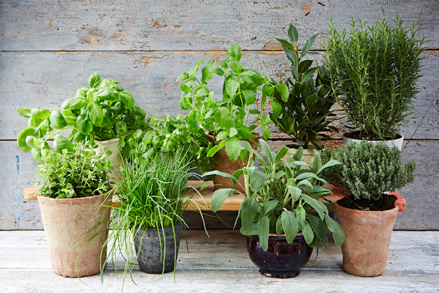 Tips on growing your own herbs