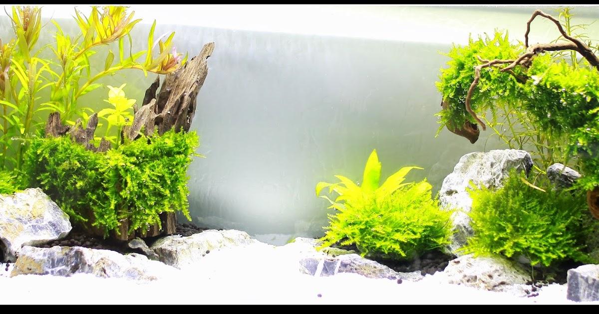 元氣水族 Genki Aquarium ~~~(桃園南崁): 屏風缸水草造景 45cm*14cm*18cm
