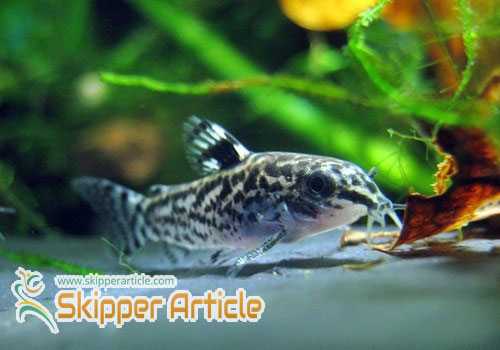 Tips on Aquarium Care and Cleaning