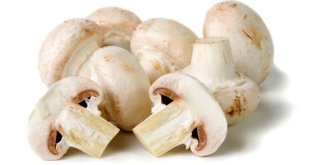 Kunci Jawaban Berilah contoh jamur yang bermanfaat bagi ...