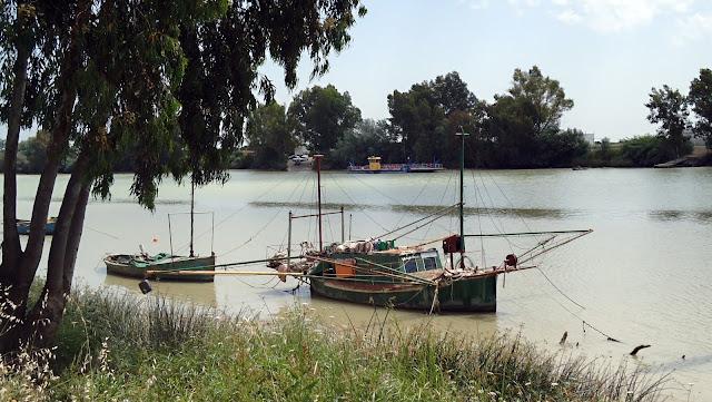 Coria_del_río