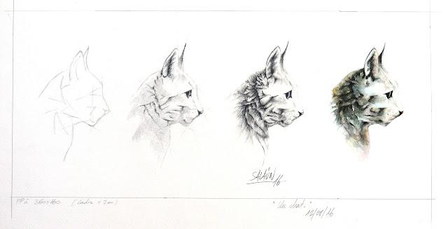 Aquarelle, graphite, chat, mickaël salaün