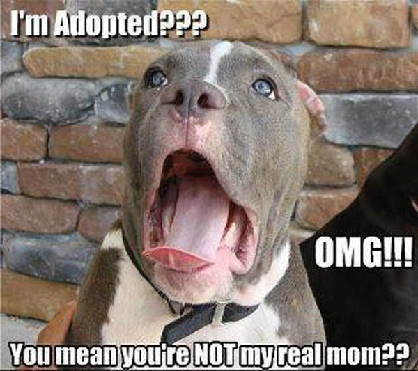 Funny dog yawing picture with caption