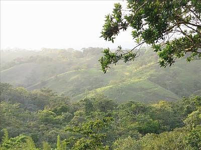 ECOSISTEMAS DE COSTA RICA: BOSQUE TROPICAL HÚMEDO PREMONTANO