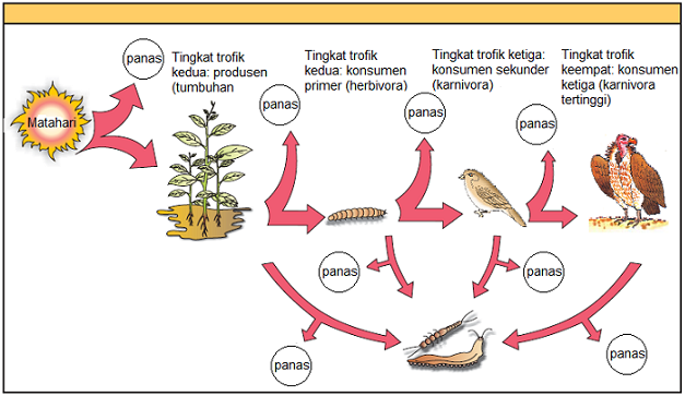 Makhluk Hidup Dalam Ekosistem Alami Ilmu Pengetahuan