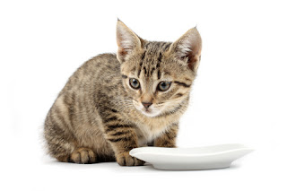 Kitten With Empty Dish
