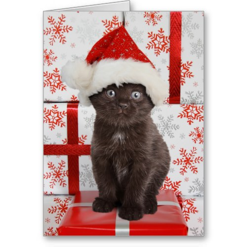 Kitten in a Santa Hat | Funny Christmas Card
