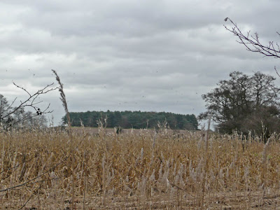 The mysterious Yarn Hill with its wooded crown, the place said to be infested with ghosts and marsh demons